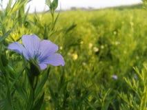 den verkliga blomman i fältet Arkivbilder