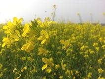 den verkliga blomman i fältet Royaltyfri Foto