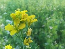 den verkliga blomman i fältet Arkivfoton