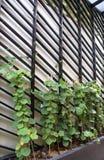Den vertikala grönsakträdgården Royaltyfri Fotografi