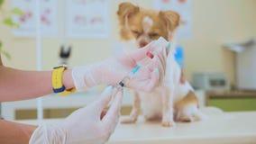 Den veterinär- doktorn förbereder sig att injicera en hund stock video