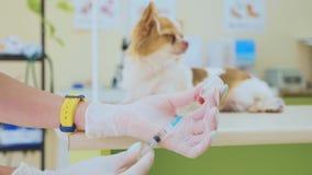 Den veterinär- doktorn förbereder sig att injicera en hund lager videofilmer