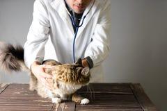 Den veterinär- doktorn med en stetoskop runt om hans hals rymmer en svart katt och ler royaltyfri bild