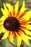 Den vibrerande blomman arkivfoto