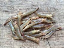 Den vietnamesiska greasybackräkan eller sandräka, Metapenaeus ensis Arkivfoton