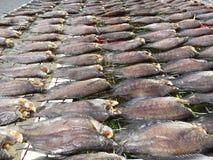 Den vietnamesiska kokkonsten: skaldjur - torkad fisk Arkivfoton