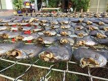 Den vietnamesiska kokkonsten: skaldjur - torkad fisk Arkivfoto