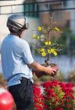 Den vietnamesiska mannen rymmer aprikosträdet i blomning arkivfoton