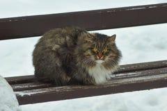 Den vilda fluffiga katten i en vinter parkerar Royaltyfri Bild
