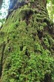 Den vintergröna regnskogen på PhuKradueng Royaltyfri Bild