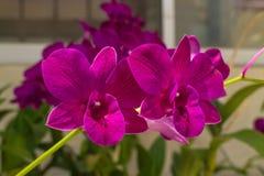 Den violetta orkidén med bladet Arkivbild
