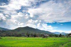 Den visuella bilden av liv som omges av berg och himmel Arkivfoton
