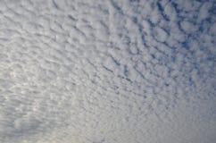 Den vita biten fördunklar i eftermiddagljuset fotografering för bildbyråer