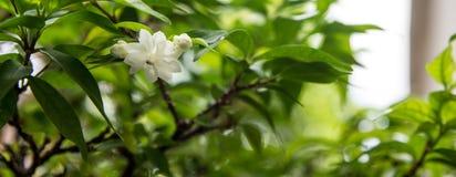 Den vita blomman Royaltyfri Foto