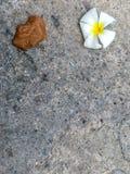 Den vita blomman och den bruna bladnedgången på det konkreta golvet arkivbilder
