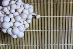 Den vita bokträdet plocka svamp (Bunapi Shimeji) Royaltyfria Bilder