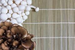 Den vita bokträdet plocka svamp (Bunapi Shimeji) och Maitake champinjonen Royaltyfri Fotografi