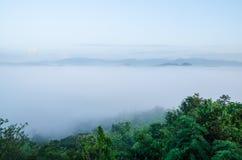Den vita dimman i morgon Fotografering för Bildbyråer