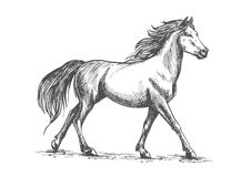 Den vita hästen går behagfullt vektor illustrationer