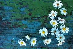 Den vita hösten blommar på gamla träblått fotografering för bildbyråer