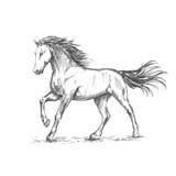 Den vita hästen med stämpling skissar ståenden Royaltyfri Foto