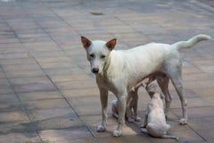 Den vita hunden och två behandla som ett barn Royaltyfri Fotografi