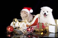 Den vita hundspitzen och kiten perser arkivbild