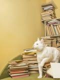 Den vita katten är kommande ut ur en hög av böcker Fotografering för Bildbyråer