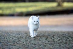 Den vita katten går runt om trädgården Royaltyfri Foto
