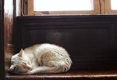 Den vita katten sover under fönstret Royaltyfri Foto