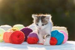 Den vita kattungen spelar garnnystan Fotografering för Bildbyråer
