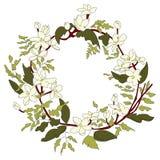 Den vita kransen Royaltyfri Fotografi