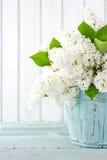 Den vita lila våren blommar i en blå vas fotografering för bildbyråer
