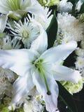 Den vita liljan med den vita krysantemumet ser lugna och ren för att gratulera eller visa beklagande arkivbild