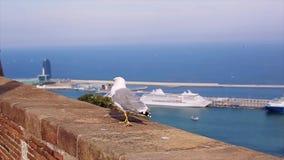 Den vita och gråa seagullen går på tegelstenstaketet på kostnad av havet i Spanien swallowtail för sommar för fjärilsdaggräs soli lager videofilmer