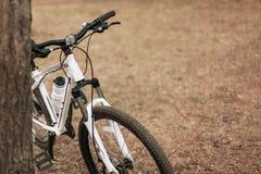 Den vita och rosa cykeln som sättas till trädet i, parkerar royaltyfria bilder