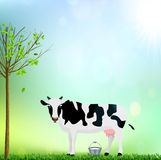 Den vita och svarta prickiga kon med en hink mjölkar illustrationen Arkivbilder