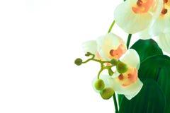 Den vita orkidén växer i kruka Royaltyfri Foto