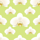 Den vita orkidén blommar på en bakgrund av denfärgade sömlösa modellen Royaltyfri Foto