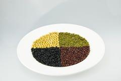 Den vita plattan av svarta bönor, sojabönor, röda bönor, mung böna Arkivfoton