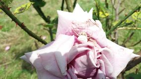 Den vita spindeln Royaltyfri Fotografi