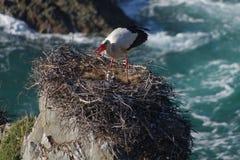 Den vita storken och behandla som ett barn Arkivbilder