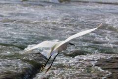 Den vita storken ?r p? stranden fotografering för bildbyråer