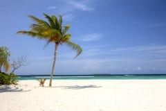 Den vita stranden med gömma i handflatan, och turkos ser Maldiverna royaltyfri bild