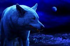 Den vita vargen grinar på natten bland ismindre kulle arkivbild