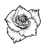 Den vita vektorrosblomman med svart inked linjen kontur royaltyfri illustrationer