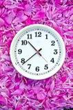 Den vita visartavlan för klockaframsidan på rosa pion blommar bakgrund Royaltyfria Bilder