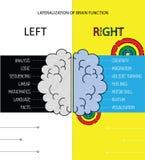Den vänstra och högra hjärnan fungerar information Arkivfoto