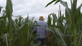 Den vuxna bonden rymmer minnestavlan i för havre skördarna för fältet och undersöka Agronomen undersöker havreväxten i fält genom stock video