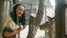 Den vuxna eleganta gladlynta kvinnan av Caucasian etnicitet matar en hjort med en morot lager videofilmer